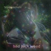 BAD HICK WEED