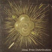 Ideal Free Distribution