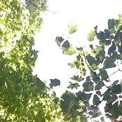 SummerSessionsDemos2011