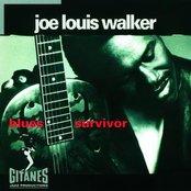 Blues Survivor