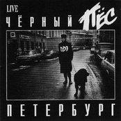 Чёрный пёс Петербург