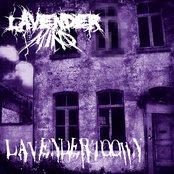 Lavendert00wn