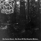 The Ancient Forest...The Forest Of The Forgotten Wisdom