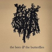 The Bees and the Butterflies