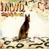 Singing Forest [Budabeats]