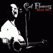 Best of Cut Flowers