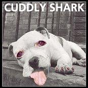Cuddly Shark