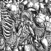 Skeletal Copula Remains