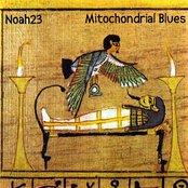 Mitochondrial Blues