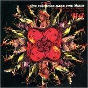 Fine Feathers Make Fine Birds (disc 2)
