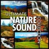 Ultimate Nature Sounds for Healing, Yoga & Spa