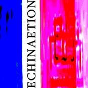 Echinaetion