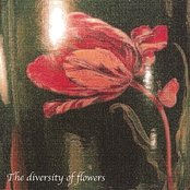 The Diversity of Flowers