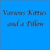 Various Kitties and a Pillow