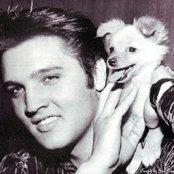 Elvis Presley 401fefc971454a32aa48e9fd7c714170