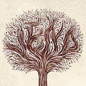 Tallest Tree