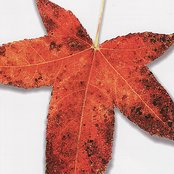 A Tribute To The Music Of Peter Gabriel: Leaves From The Tree