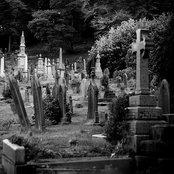 Dead Oak Tree in the Cemetery