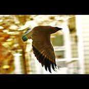 Fledgling Flight