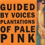 Plantations of Pale Pink