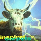 album Commercial Rain by Inspiral Carpets