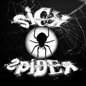 Sick Spider