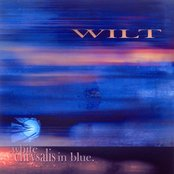 White Chrysalis in Blue