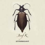 album Entomology by Josef K