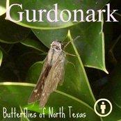 Butterflies of North Texas