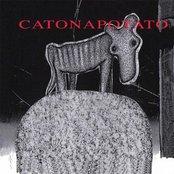 Catonapotato