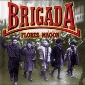 Brigada Flores Magon