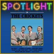 Spotlight On The Crickets