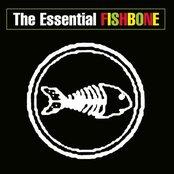 The Essential Fishbone