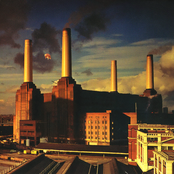 album Animals by Pink Floyd