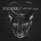 Caracal (Limited Deluxe Edition)