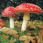 Colored Mushroom and the Medicine Rocks