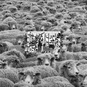Grey Sheep II
