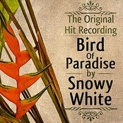 The Original Hit Recording - Bird of Paradise