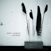 Cover artwork for Feathers
