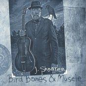 Bird Bones & Muscle