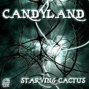 Starving Cactus