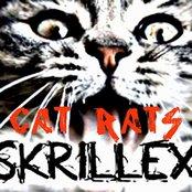 Cat Rats
