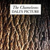 Dali's Picture