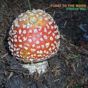 Fungi To The Moon