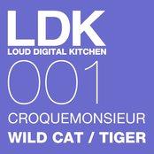 WILD CAT / TIGER
