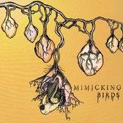 Mimicking Birds