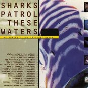 Sharks Patrol These Waters: The Best of Volume Too (disc 1)