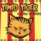 Timid Tiger & A Pile Of Papers