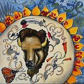 Holy Water Buffalo
