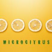 Microcitrus